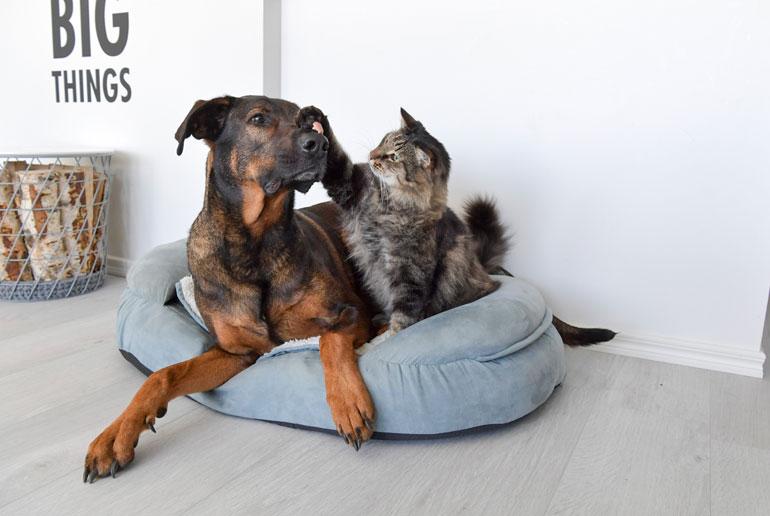Rambo mainoskissa ja Rocky koira