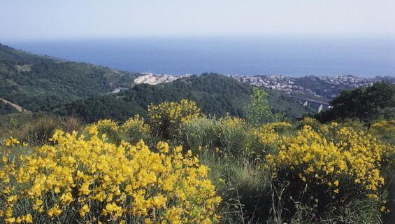 Bormida sijaitsee Ligurian alueella.