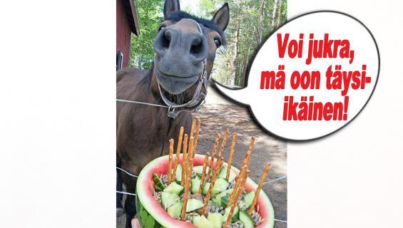 hauskat kuvat hevonen synttärit
