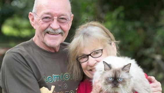 Dinky-kissa löytyi Dubaista.
