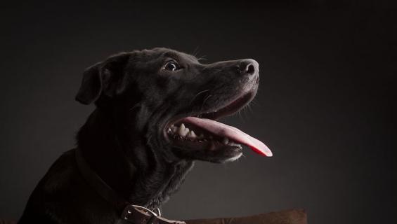 Labradorinnoutaja palasi kotiin 10 vuoden jälkeen.