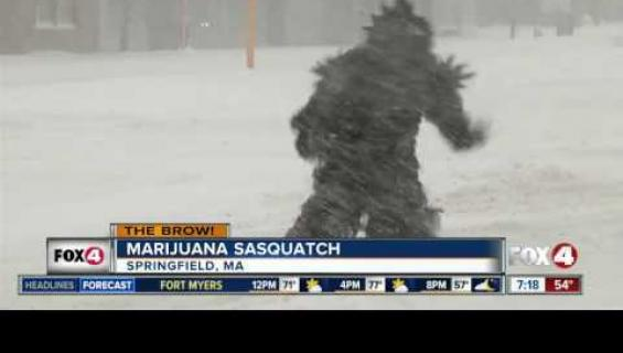 Kannabis-isojalka kompuroi kuokkavieraaksi uutislähetykseen!