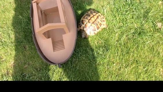 """Maailman vihaisin kilpikonna terrorisoi omistajiaan: """"Se on hullu"""" - katso hauska video!"""