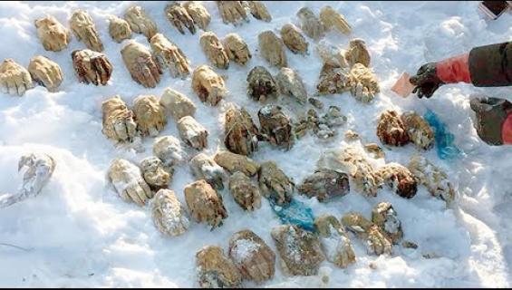 Hyytävä löytö: 54 ihmisen kättä huuhtoutui rantaan Venäjällä! Katso video!