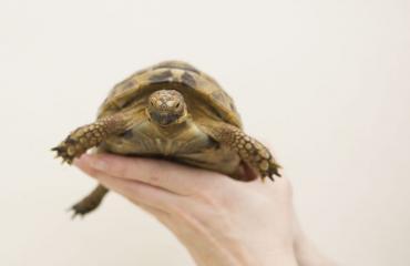 Omistaja elvytti kilpikonnansa.