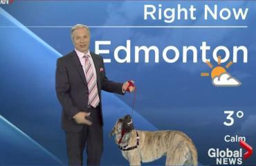 Meteorologi otti koiran mukaan säätiedotukseen: huonosti kävi - video!