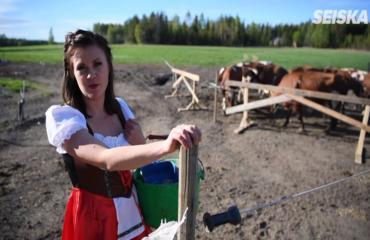 Seiskan toimittaja opetteli lypsämään käsin: Lehmät söivät mekkoni!