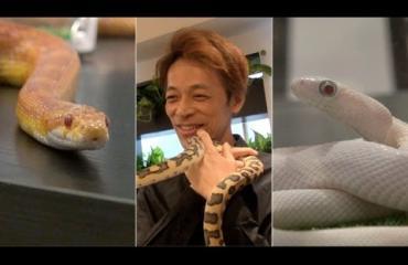 Japanin käärmekahvila vetää turisteja - ylistetään TripAdvisorissa! Katso video!