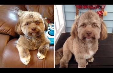Ihmiskasvoinen koira sai internetin sekaisin - Yogilla on lukuisia julkkiskaksoisolentoja! Katso kuvat ja video!